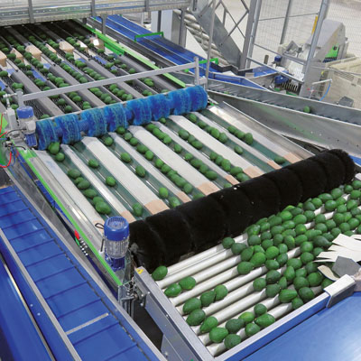A fully automated turnkey line with Pomone 8-lane sizer at Mission Produce in Peru