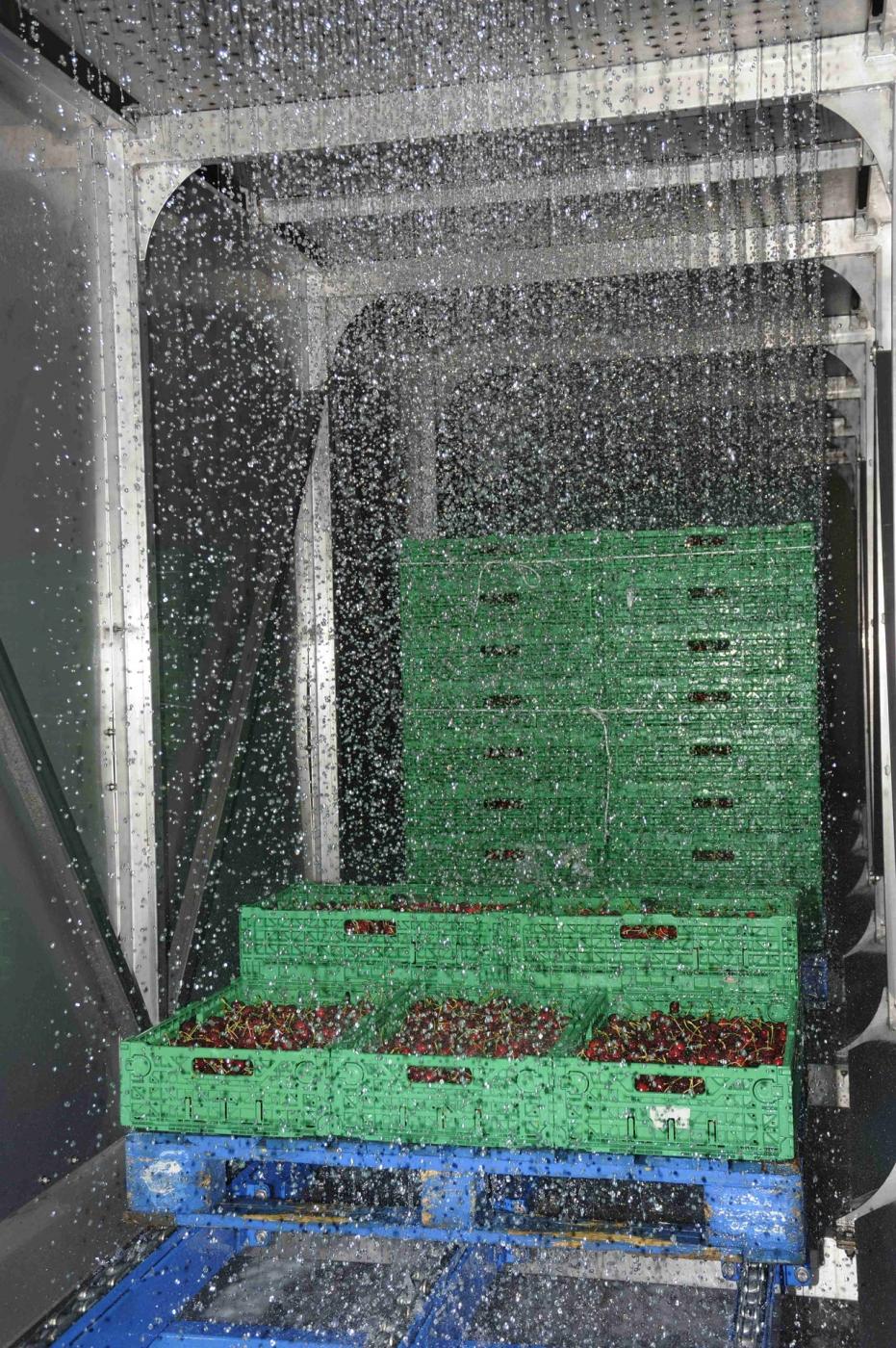 Drencher pour refroidir des cerises
