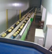 GÉRIN & FILS - Précalibrage Melon / Calibreuse ONEWAY 152