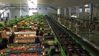 De Keur - Station fruitière pommes - lignes emballage
