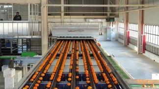 NONGFU SPRINGS - Ligne automatisé pour calibrage et emballage orange
