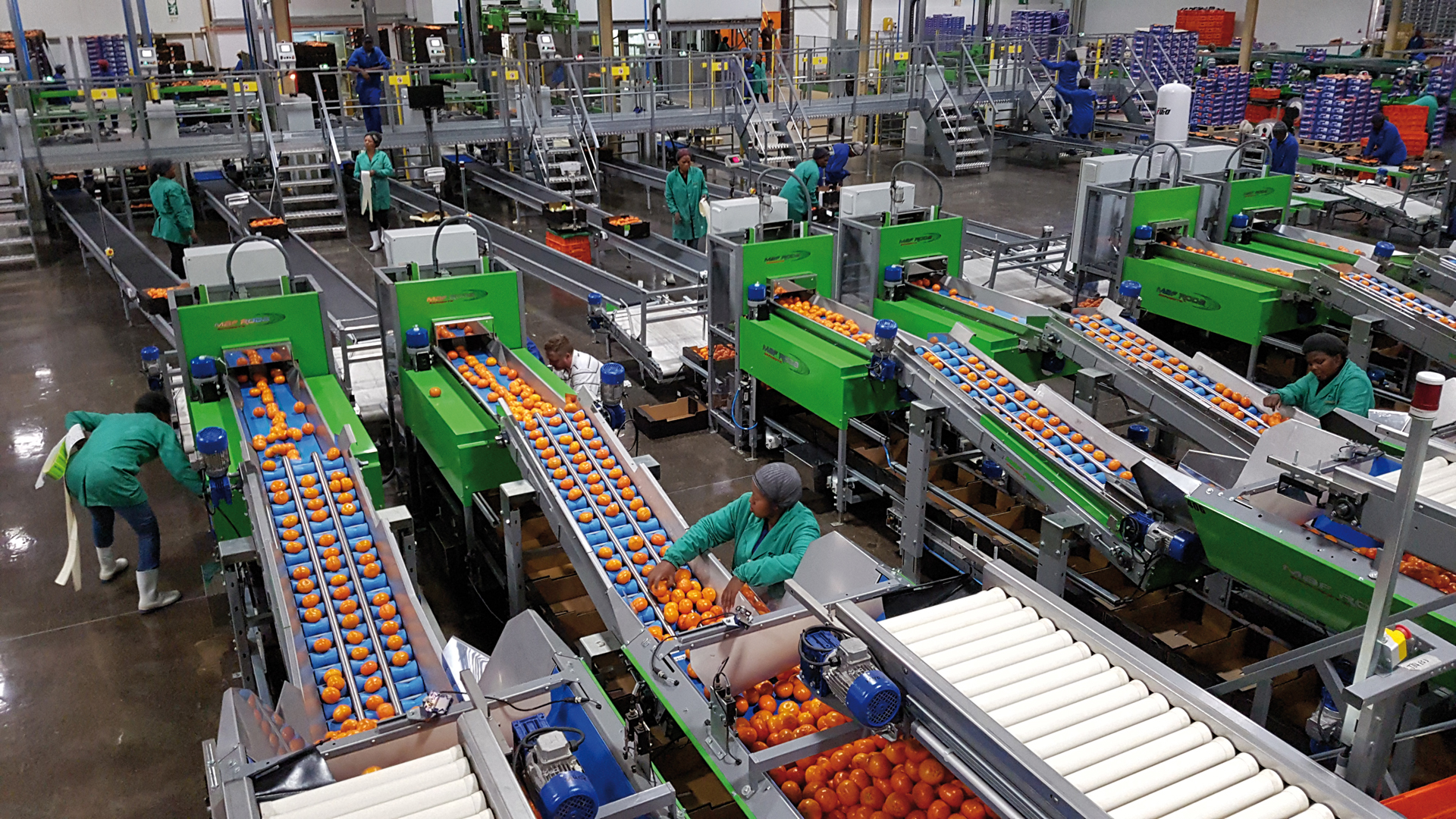 INDIGO FRUIT FARMING - station fruitière - agrumes / oranges
