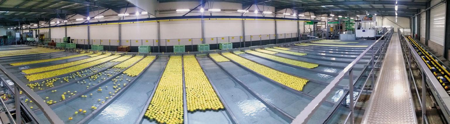LIMDOR - Précalibrage Pommes