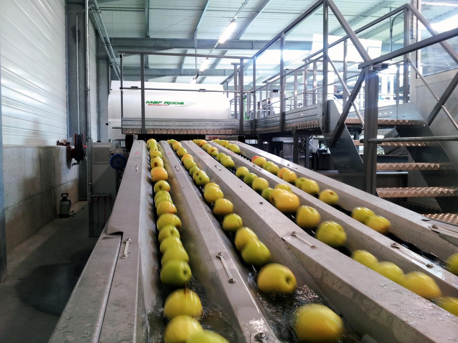 LIMDOR - Précalibrage Pommes / Singulation dans l'eau