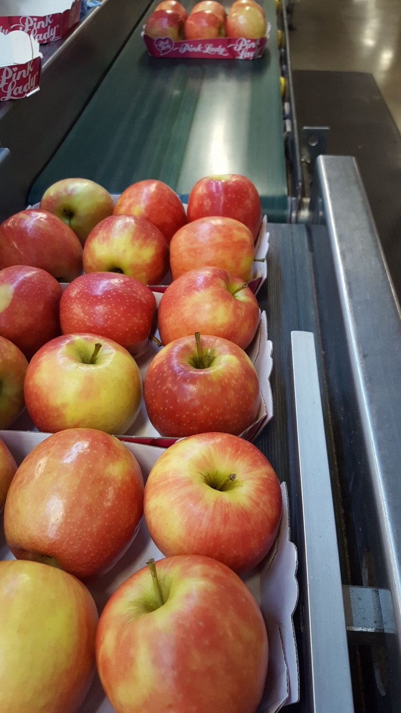 Pommes en barquette