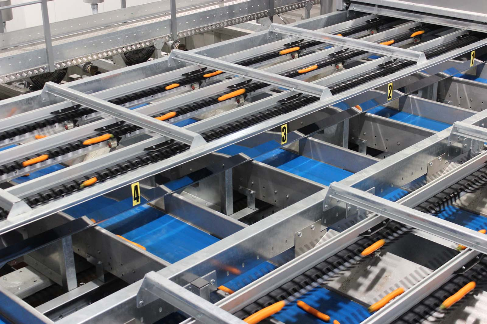 Sorting and packaging for long vegetables - AXONE