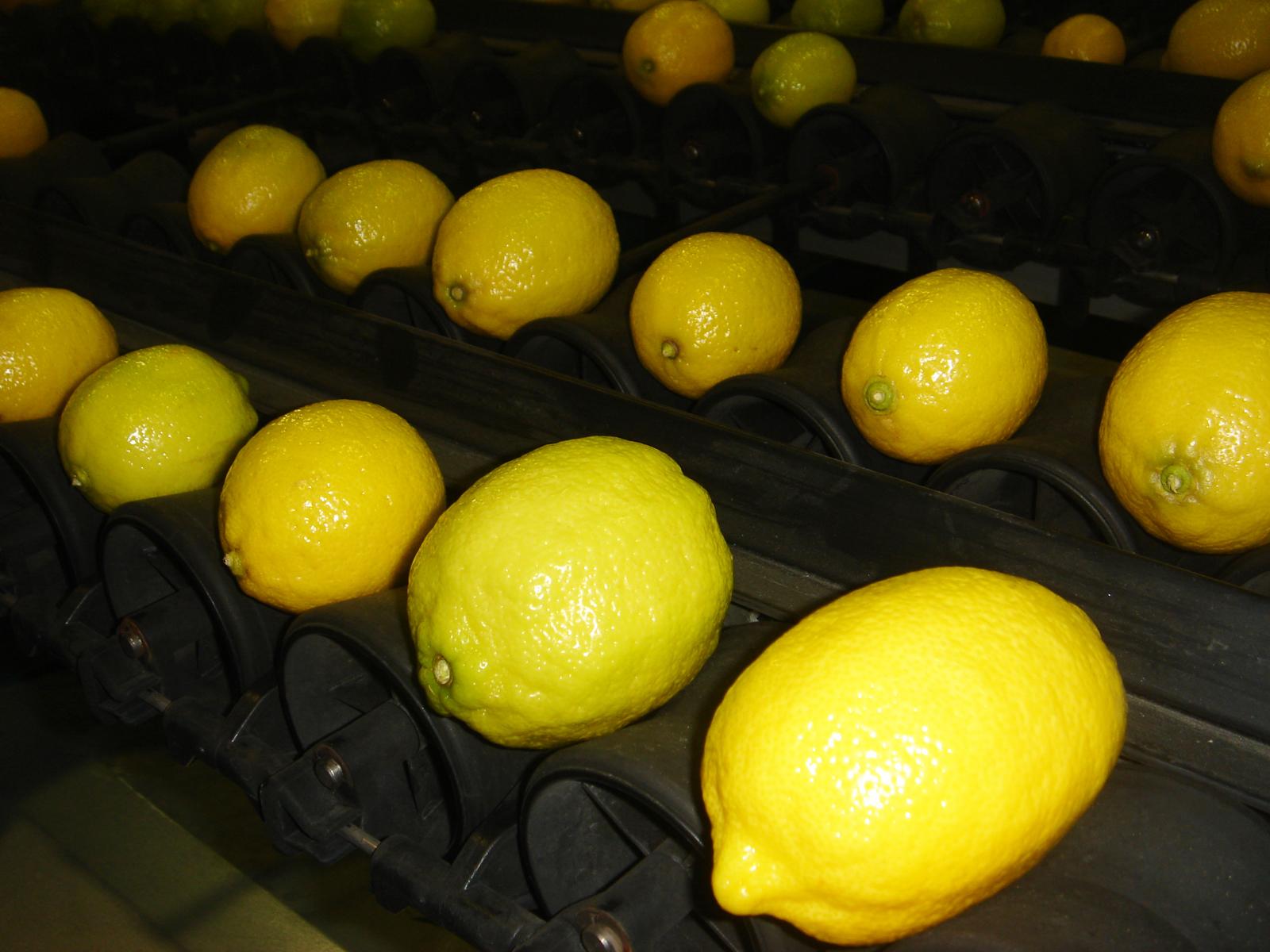 Calibreuse électronique - Fruits sphériques - HIGHWAY