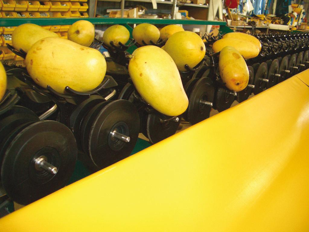 Multi-Size Fruit sizers - INTEGRA