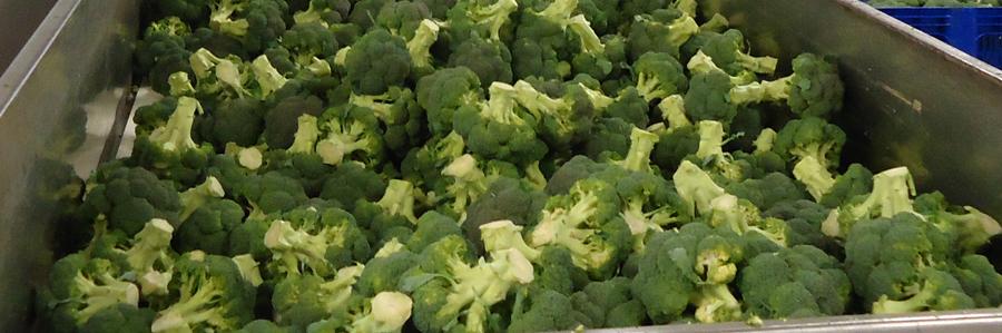 Panoramique légumes-brocolis et artichauts