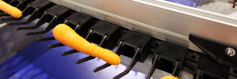 Panoramique légumes-carotte et pomme de terre