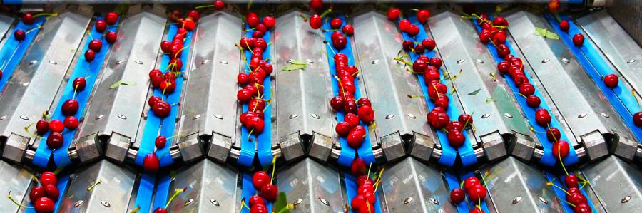 Panoramique fruits-cerise