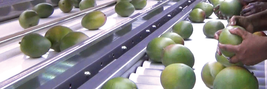 Panoramique fruits-fruits exotiques, ananas et mangue