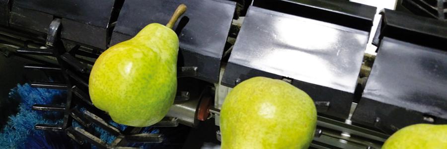 Panoramique fruits-poire