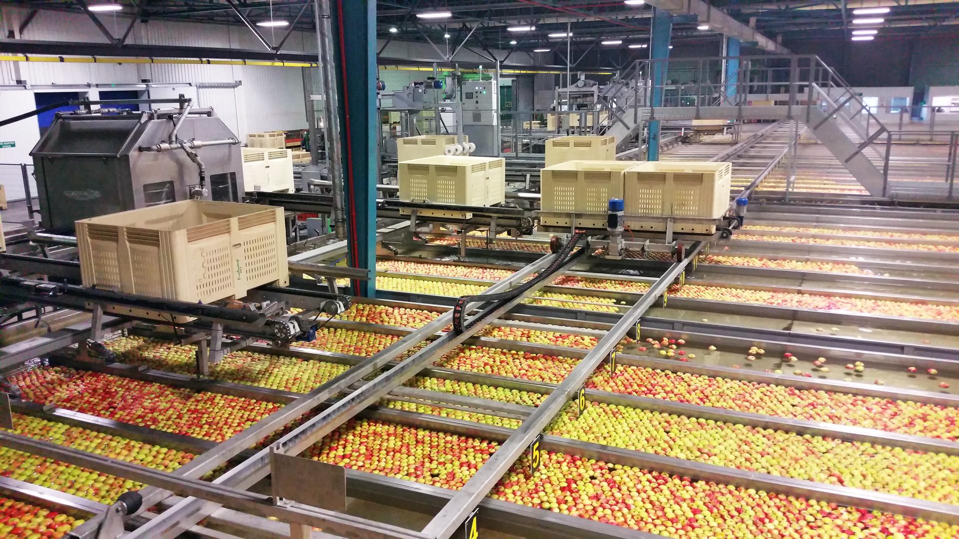 VALLEY PACKERS (RSA) - Précalibrage Pommes - Calibreuse et canaux