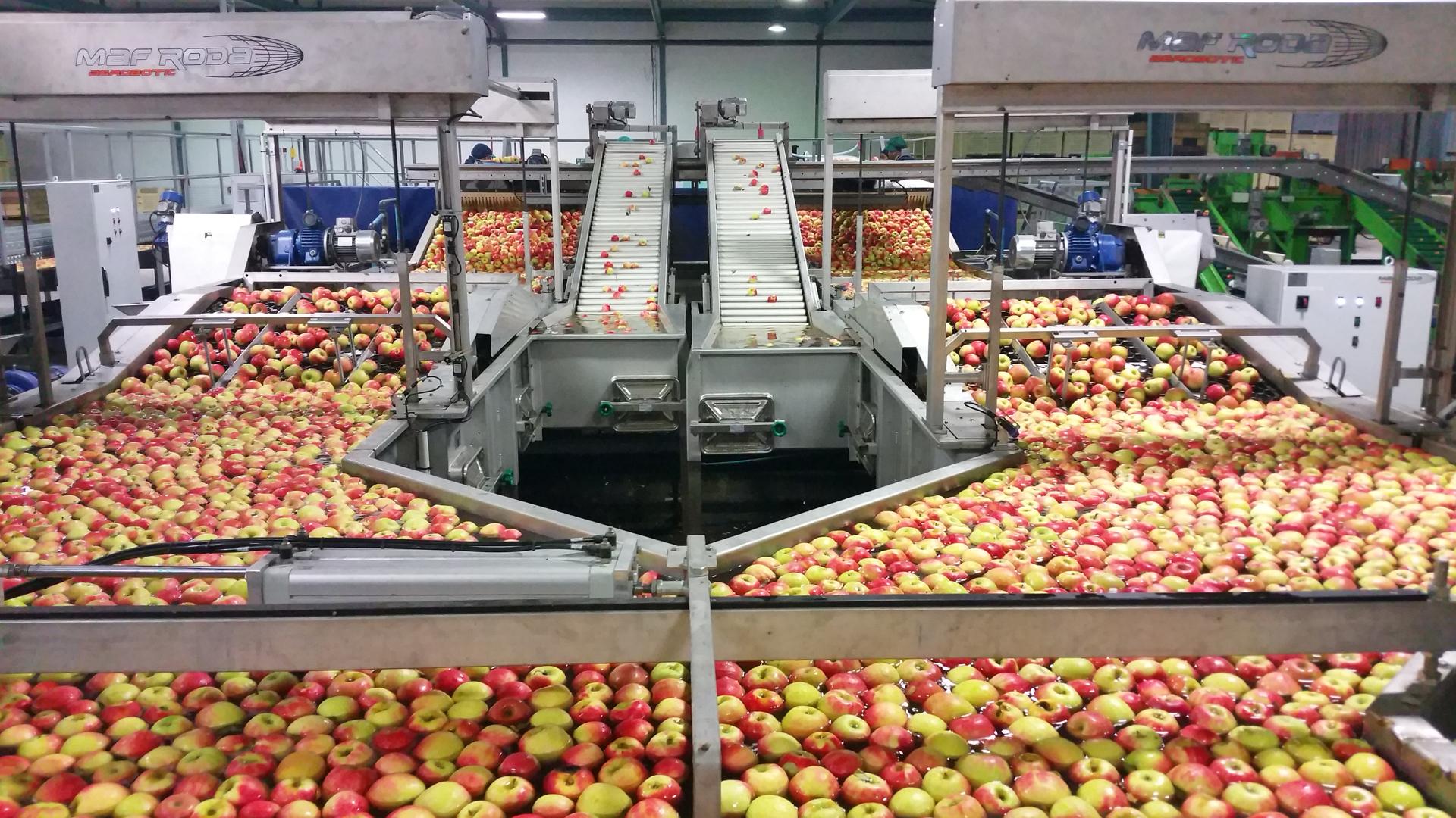 VALLEY PACKERS (RSA) - Précalibrage Pommes - Elimination petits fruits et élévateur