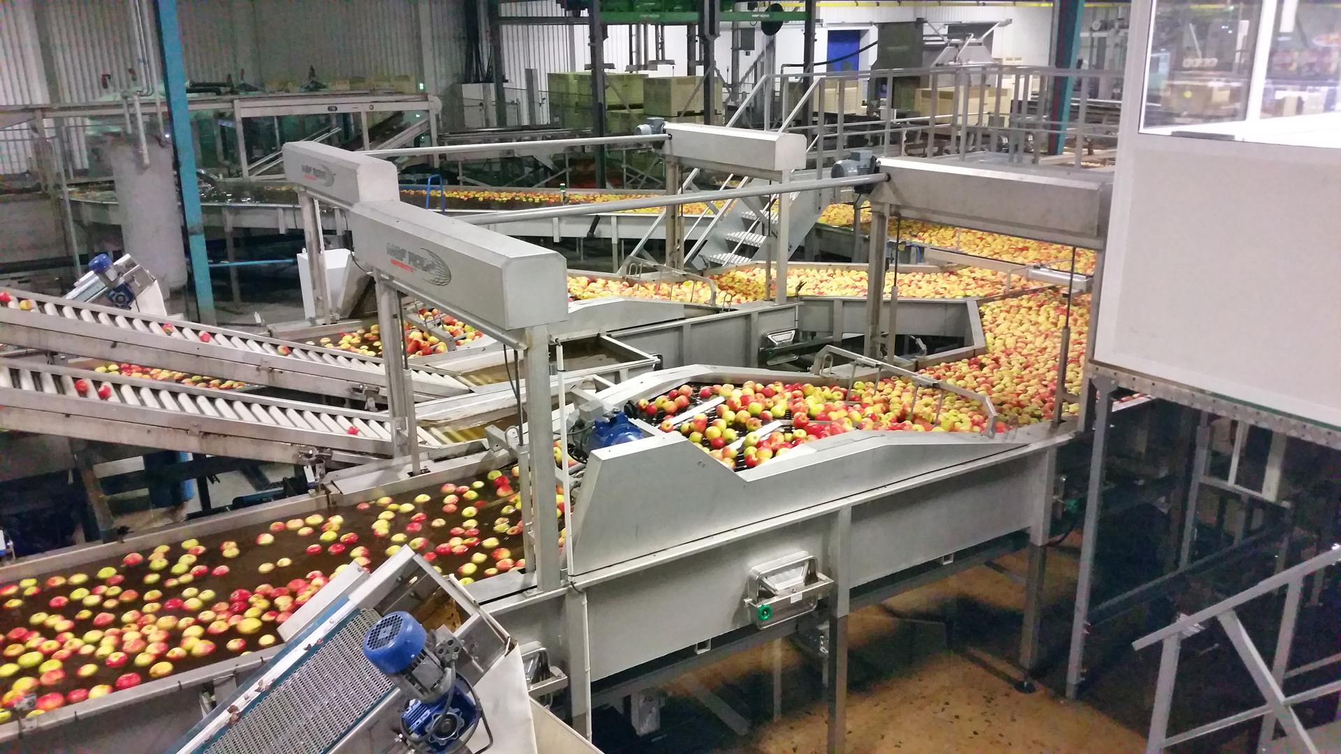 VALLEY PACKERS (RSA) - Précalibrage Pommes - Eliminateur petits fruits