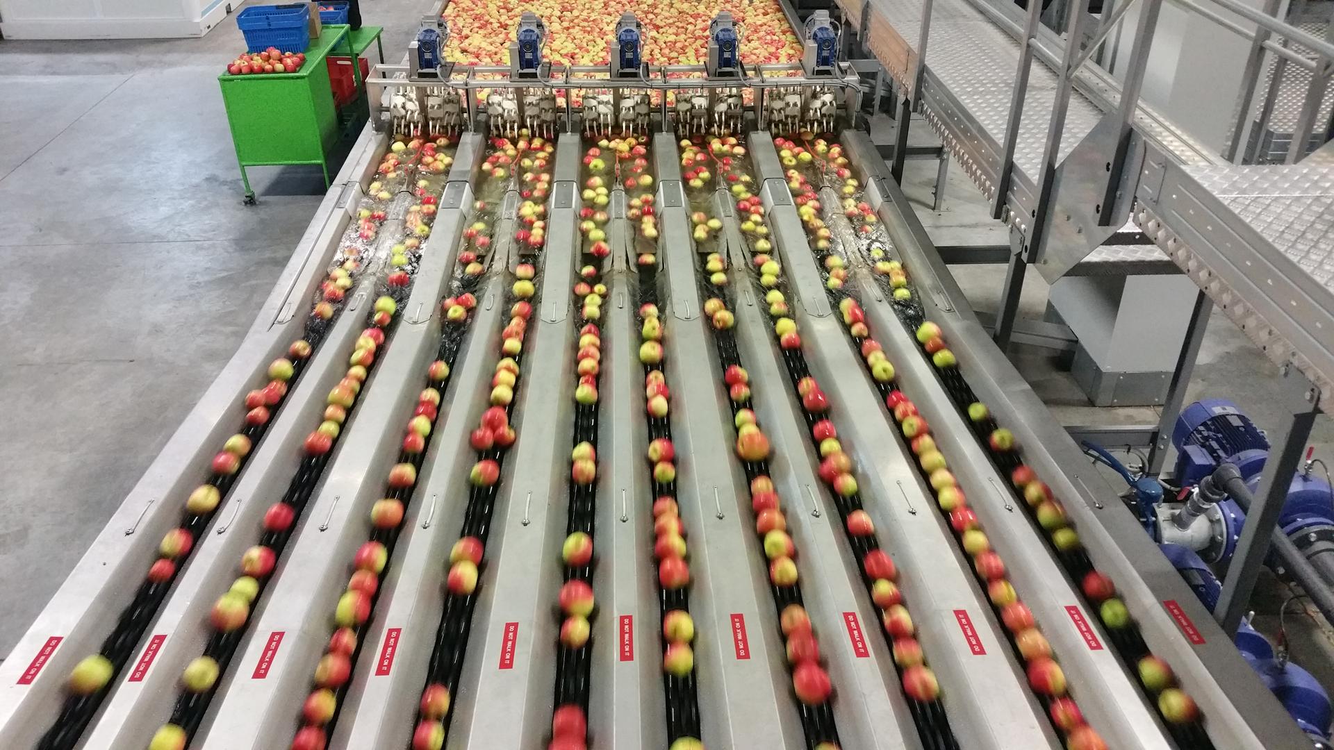VALLEY PACKERS (RSA) - Précalibrage Pommes - Singulatoin dans l'eau