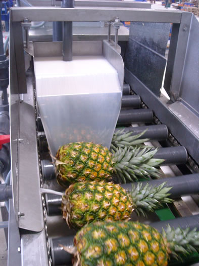 Cascading treatment on pineapple