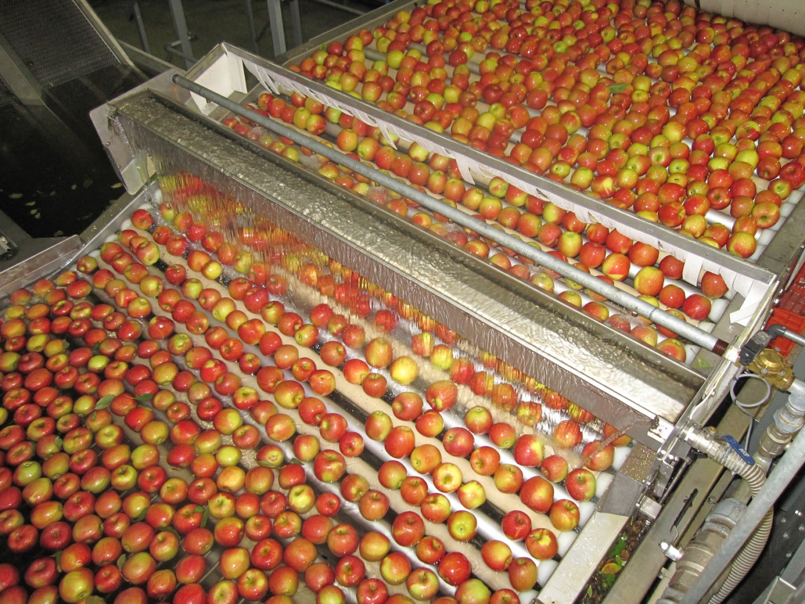 Rinsing fruit - Waterfall on roller elevator