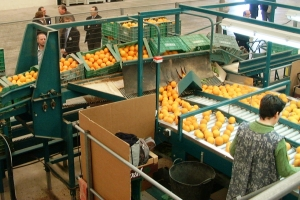 Automated movement in twist for emptying crates